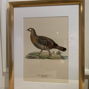 Selection of framed Swedish Bird lithographs