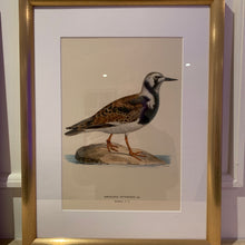 Load image into Gallery viewer, Selection of framed Swedish Bird lithographs