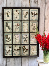 Load image into Gallery viewer, Large framed series of Italian pressed flowers dating from 1905