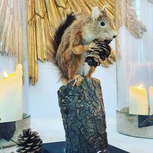 Load image into Gallery viewer, Squirrel on a log