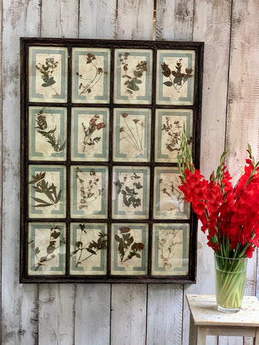 Large framed series of Italian pressed flowers dating from 1905