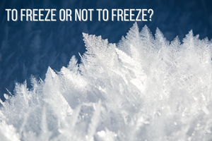 To Freeze or Not to Freeze? That is the question...