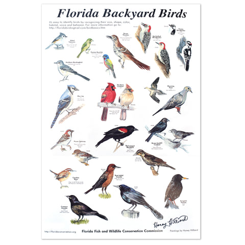 Bird Poster, Signed, 20x30