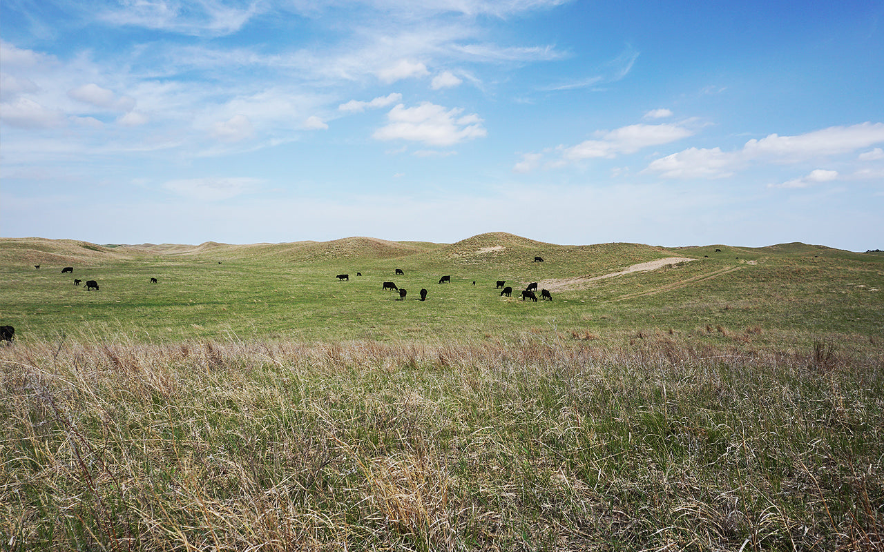 About Morgan Ranch Sand Hills