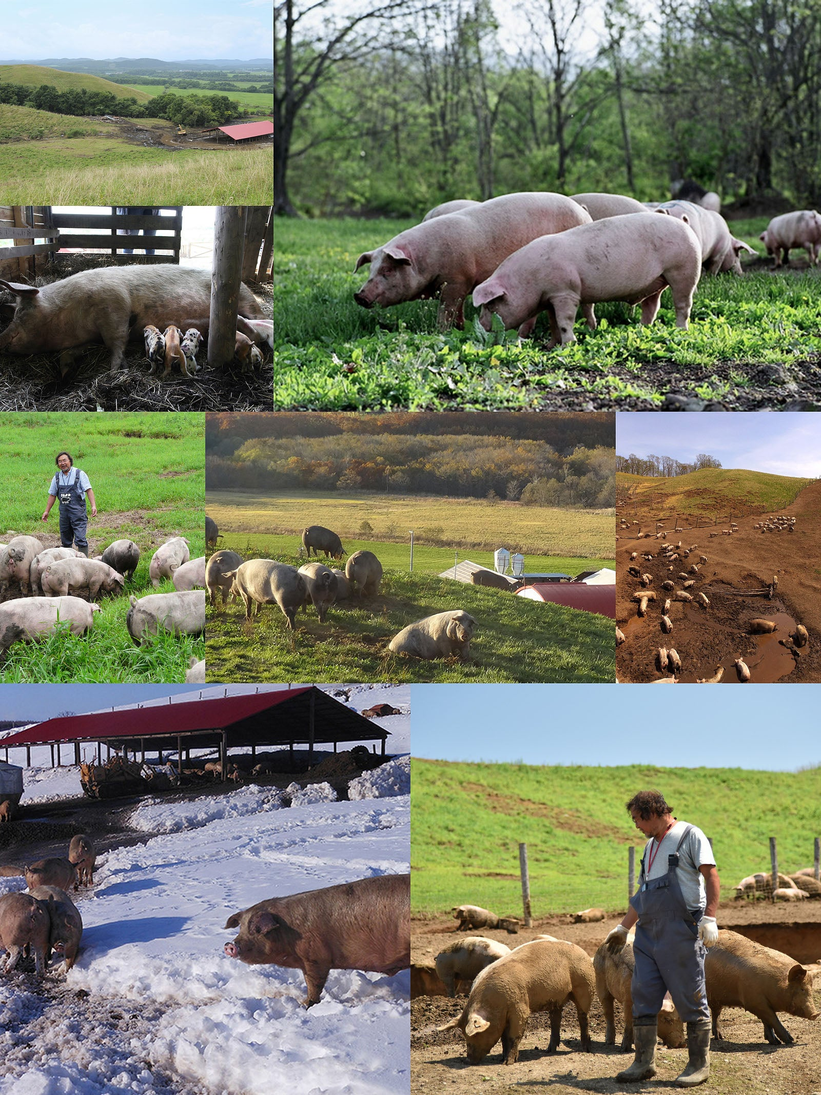 el paso farm collage