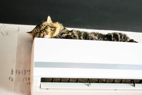cat sleeping on the air conditioner