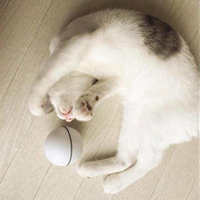 Rolling Laser Ball Cat Toy
