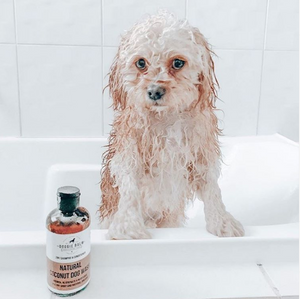 DoggieBalm Co. Natural Coconut Shampoo and Conditioner