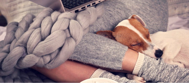 Work From Home Tips with Your Dog