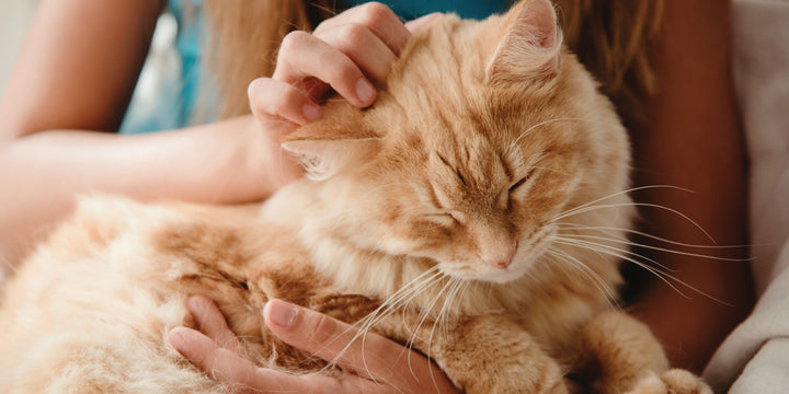 TOP 5 HEALTH PROBLEMS IN PETS AND NUTRIT