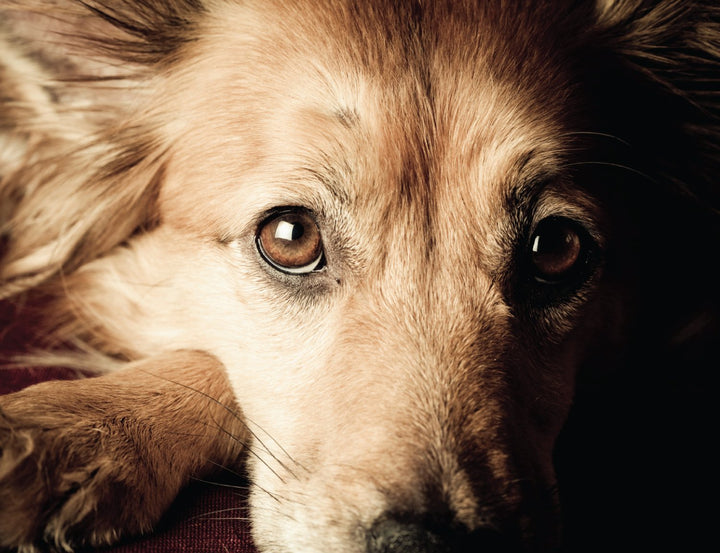 Surprise! Your Dog Has Leaky Gut
