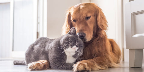 Digestive Stress in Dogs & Cats : Causes & Remedies