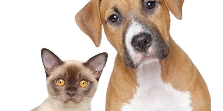 GUT HEALTH: THE KEY TO YOUR PET'S IMMUNE