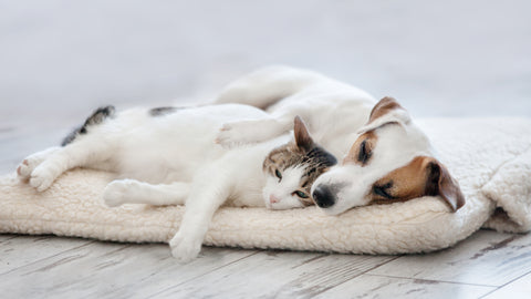 Top 6 Home Remedies for Dog & Cat UTI