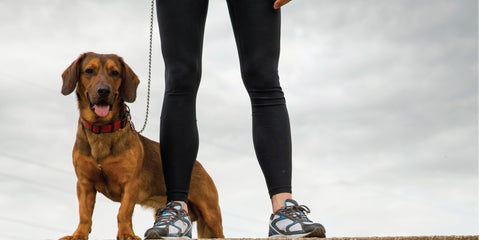 Tip: Exercise for the Aging Dog
