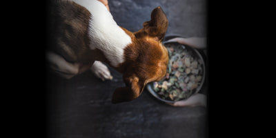 The Truth Behind Raw Dehydrated Dog Food: Is It Still Raw?