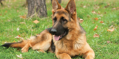 Signs of Enzyme Deficiency in Pets : Natural Remedies