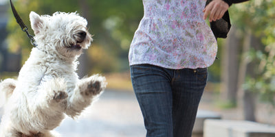Signs Your Pet Needs Enzymes