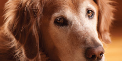 3 Top Challenges of Senior Dogs