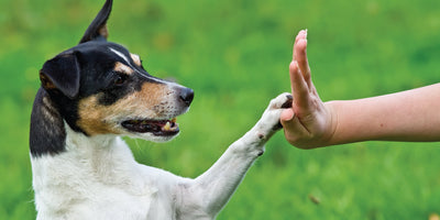 3 Stress Reducers for Dogs