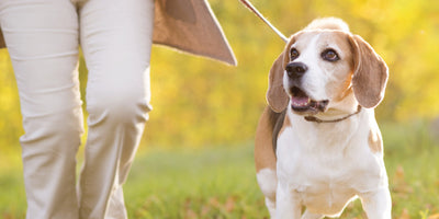 Tips for Allergy Season for Pets