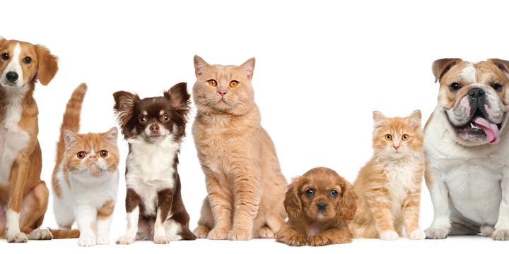 SIGNS OF MALABSORPTION IN PETS