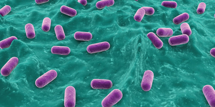 EMERGING STUDIES: BACTERIA KEEPS YOUR PE