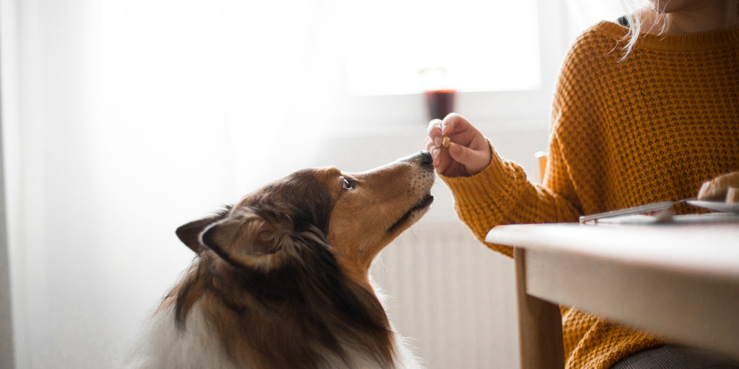 Acid Reflux (Gerd) in Dogs