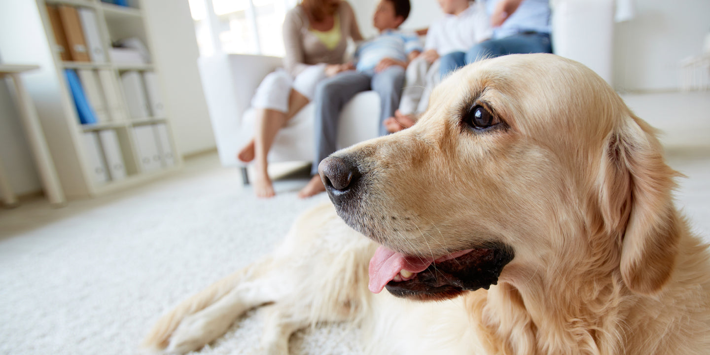 Bladder Infections & UTI in Dogs
