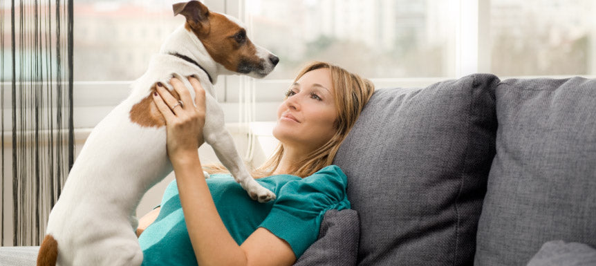 ic:What to do after your dog is on antibiotics.