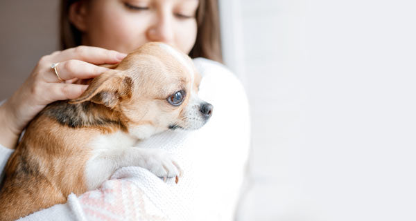 worm prevention in dogs puppies