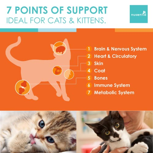 Allergy Support + Skin & Coat (Cats)