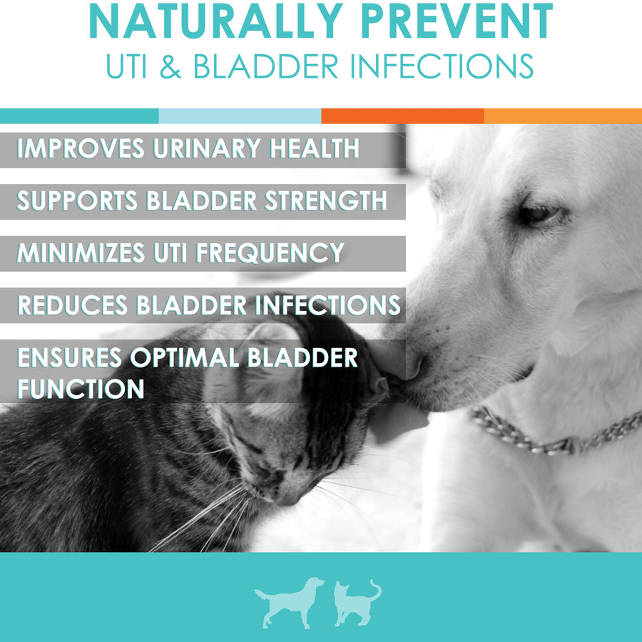 UTI treatment dogs cats natural