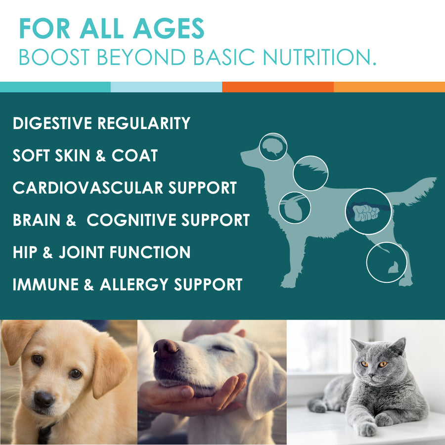 fish oil benefits dogs