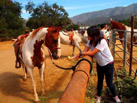 Lishan feeding apples to the horses
