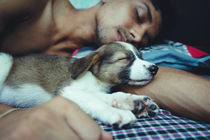 man asleep in bed with puppy next to him