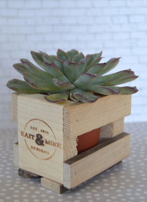Single Succulent Pallet Wood Crate
