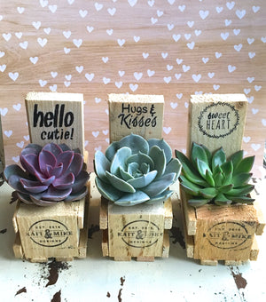 Motivational Succulent Crate--Pack of 3