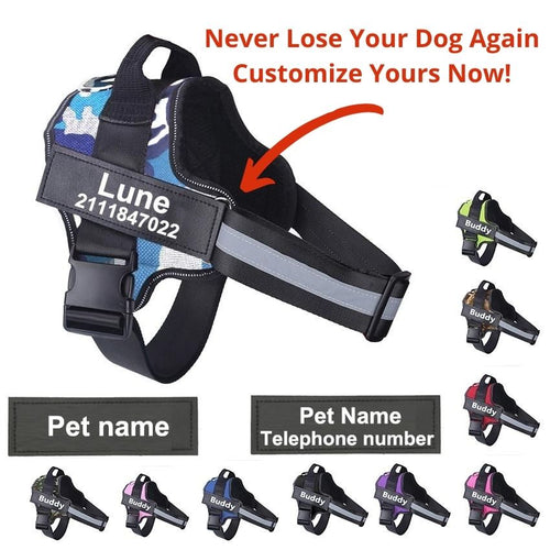 personalized dog harness with name