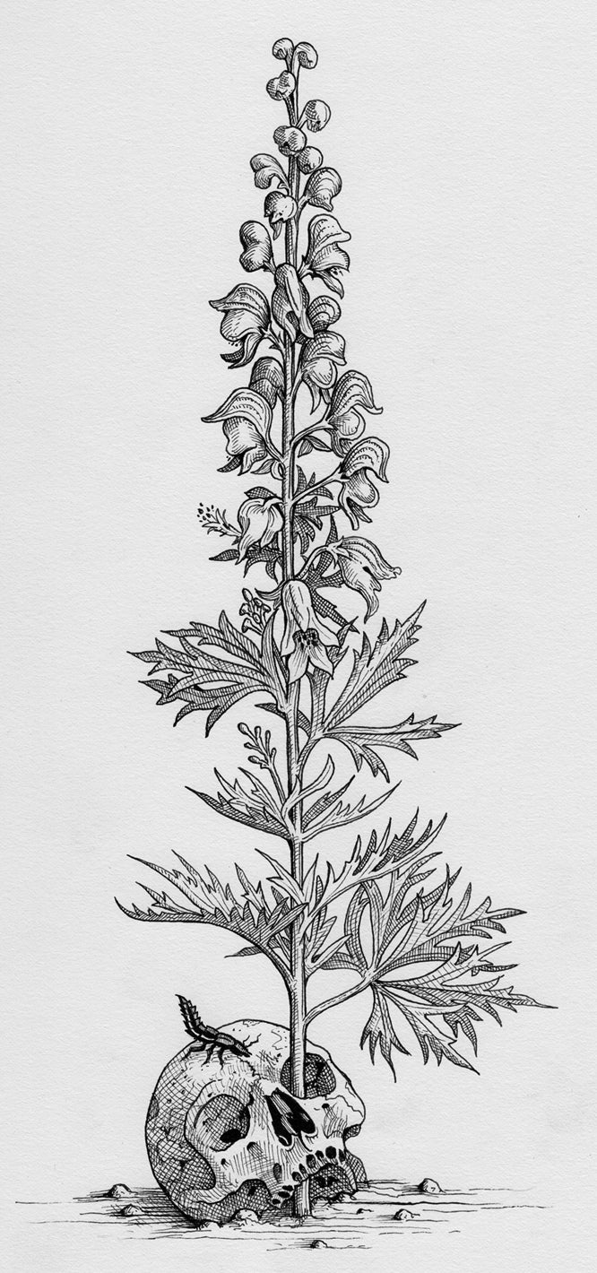 Monkshood (Illustration from The Green Mysteries)