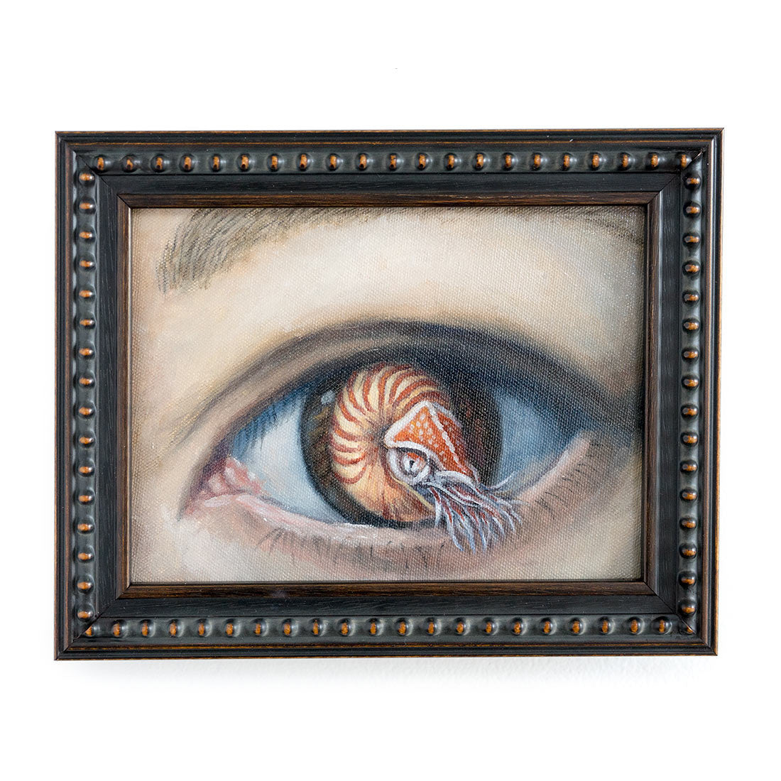 Nautilus Eye