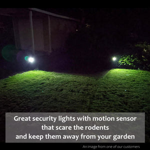 Solar Path Spotlight with Motion Sensor
