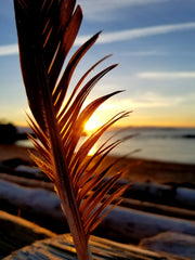 eagle feather at the beach at sunrise