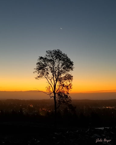 Sunrise and tree and crescent moon