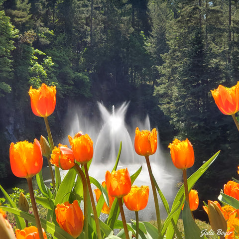 Tulips in front of a fountain