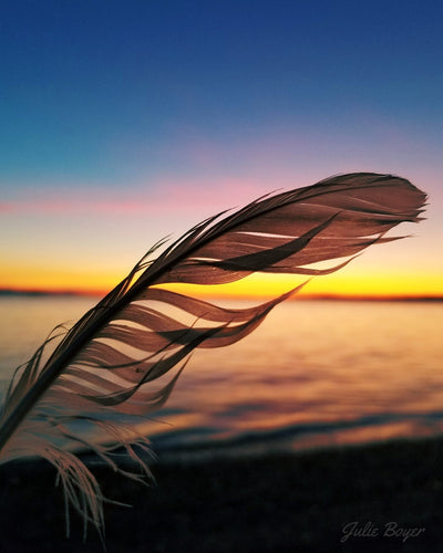 Pink Sun Rising Behind a Feather
