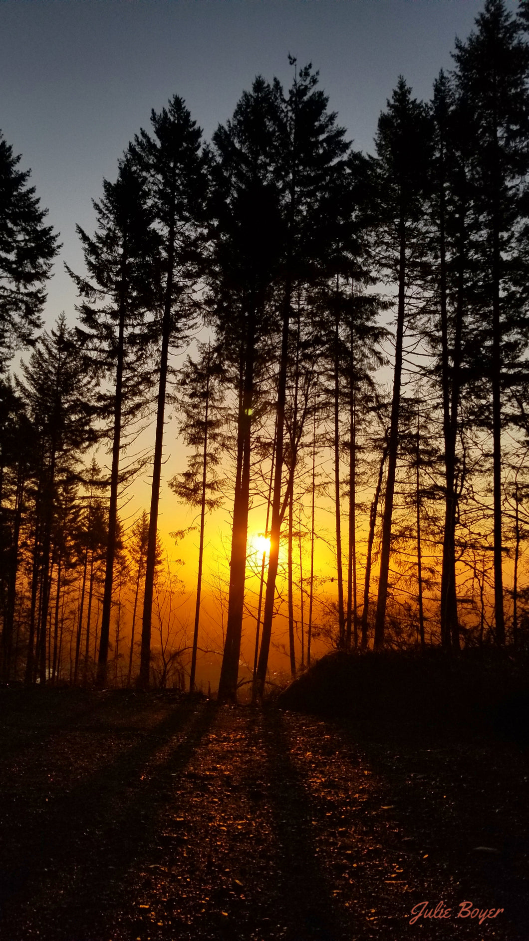 A Burst of Sunrise Through The Trees