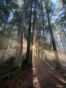 Magical Forest in Sunlight