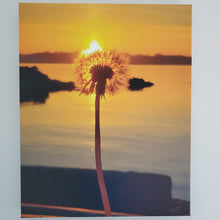Sunrise Dandelions on Canvas 16x20