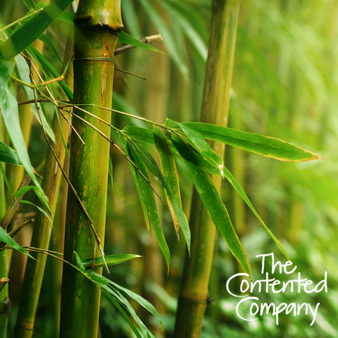 Contented Company Eco Zero Waste Blog Bamboo